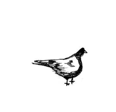 Watch and share Bird Animation Test GIFs on Gfycat