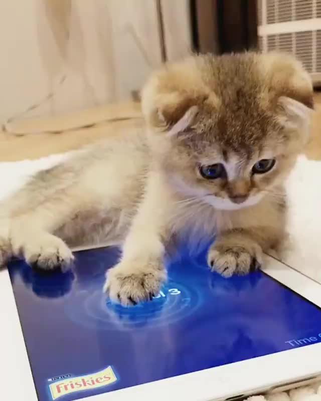 cat, kitten, Catching tonight's dinner. 🎣 GIFs
