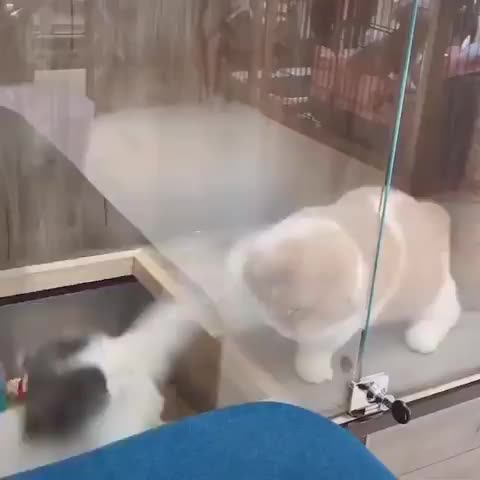cat, cats, funny, You're lucky that glass is there, bro! GIFs