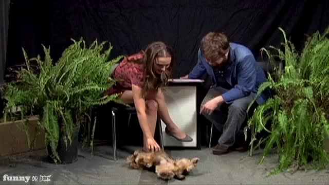 Natalie portman, between two ferns, between two ferns with zach galifianakis, fod, funny or die, funnyordie, natalie portman, zach galifianakis, he thing GIFs
