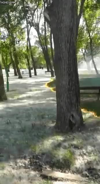 Watch and share 스페인 소방대가 꽃가루를 제거하는 모습 GIFs on Gfycat