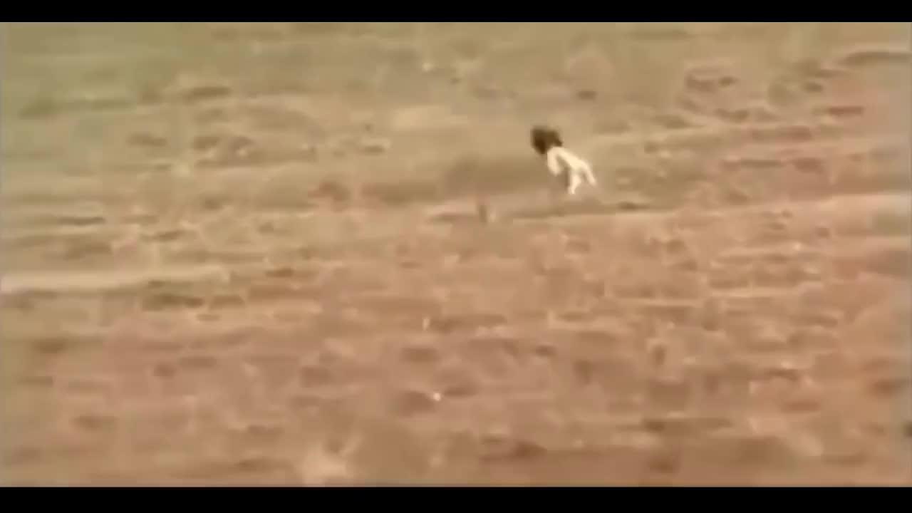 Ozzy Man Reviews: Bunny vs Dogs GIFs