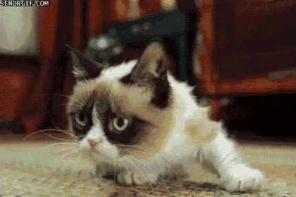 Watch grumpy GIF on Gfycat. Discover more related GIFs on Gfycat