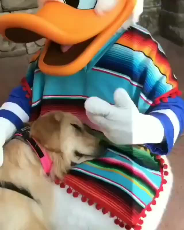 Nala, The Service Dog, Got To Meet Donald The Duck And They Became The Best Of Friends