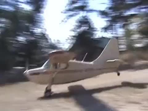 Watch and share Nonononoyes GIFs and Aviation GIFs on Gfycat
