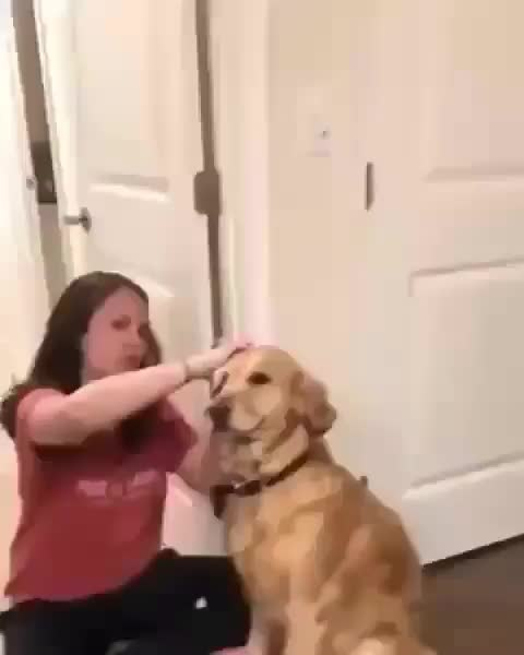 funny, dog, aww, Doggo grin and bear it GIFs
