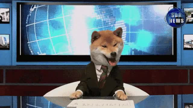 Watch this doge GIF on Gfycat. Discover more dog, doge, doggo GIFs on Gfycat