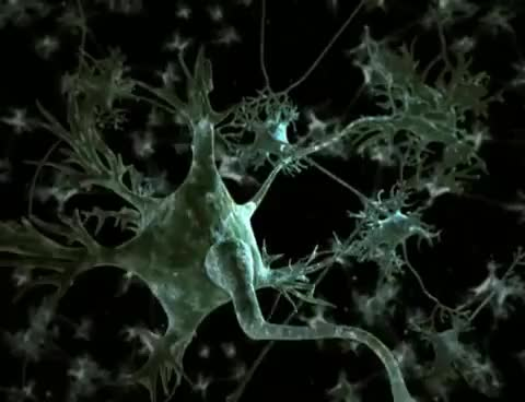 Watch Neurotransmitter Synapse 3D Animation GIF on Gfycat. Discover more related GIFs on Gfycat