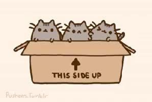 Watch and share Pusheen Ef GIFs on Gfycat