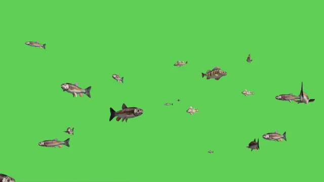 Watch and share Blue Screen Fish GIFs and Hd Stock Footage GIFs by dracoyt on Gfycat