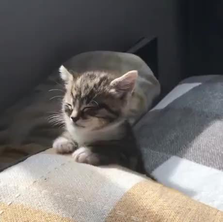 Watch and share Kitten GIFs by esberat on Gfycat