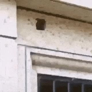 Watch and share Installing The Latest Surveillance Technology GIFs on Gfycat