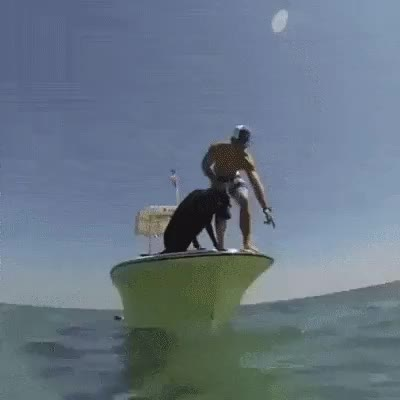 -WarHounds-, Going for a swim! GIFs