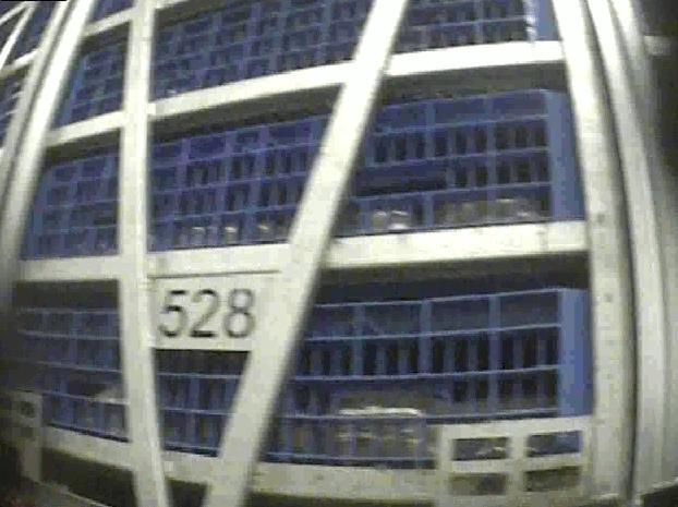 Ett lastbilssläp fullt med lådor med kycklingar