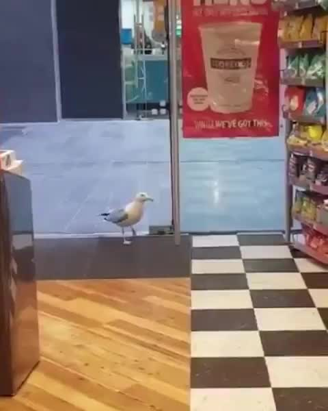 Watch and share Smooth Crimi-gull GIFs by tothetenthpower on Gfycat