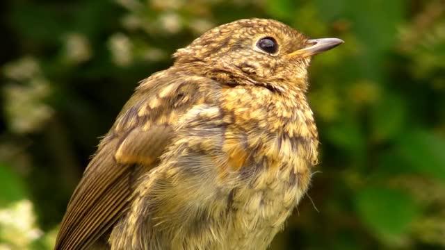 Watch and share Vögel Zwitschern GIFs and Birds Chirping GIFs on Gfycat