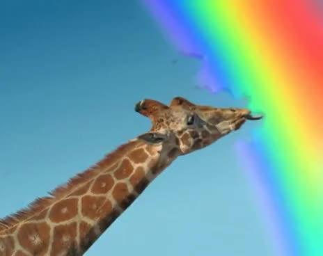 rainbow, rainbow colors, skittles, Skittles — Giraffe GIFs