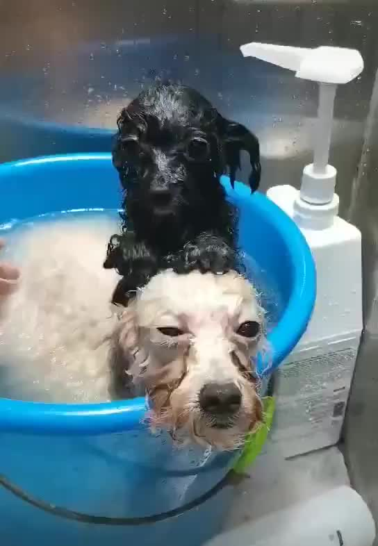 Watch and share Bath GIFs and Dogs GIFs by jj on Gfycat
