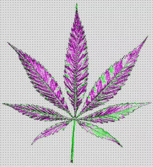 Watch and share Pot GIFs on Gfycat