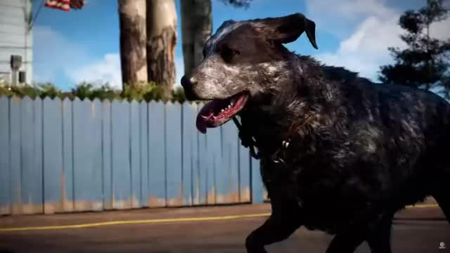 Watch and share Far Cry 5 Puppy GIFs by Choklit Cow on Gfycat