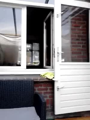 Watch and share Flying Doggo GIF - GIFs by likkaon on Gfycat