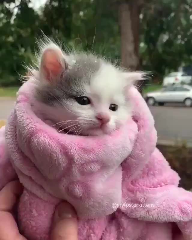 Watch and share Kitten GIFs by Farrukh Shah on Gfycat
