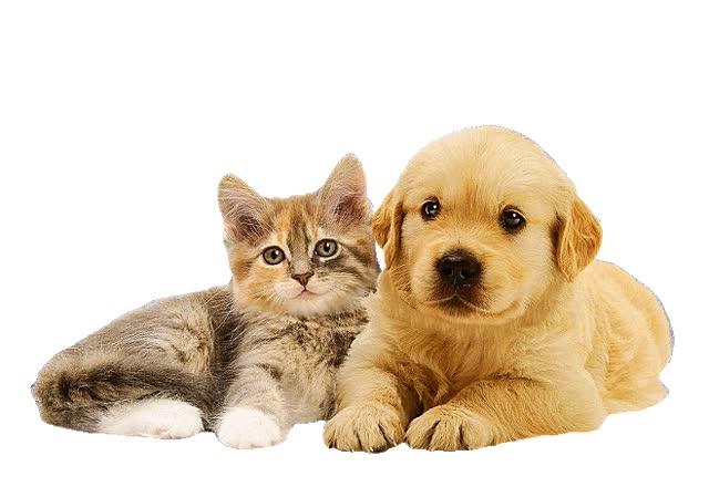 Картинки и анимации с кошками и собаками, открытки днем никаха