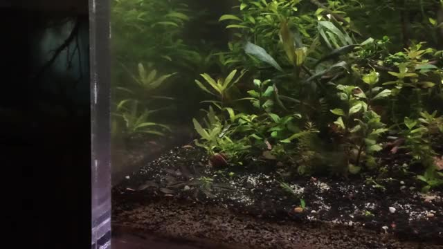Watch and share Pygmy Cory GIFs and Aquariums GIFs by alcimedes on Gfycat