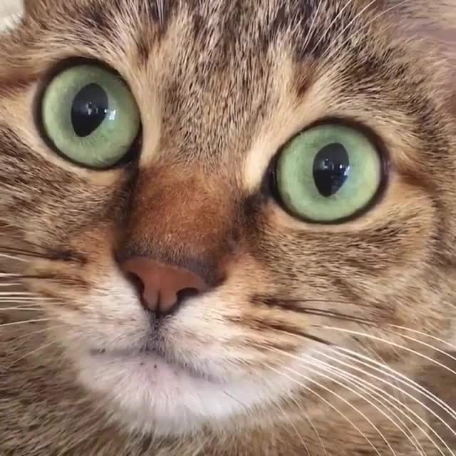 Watch and share Cat Having Hiccups GIFs on Gfycat