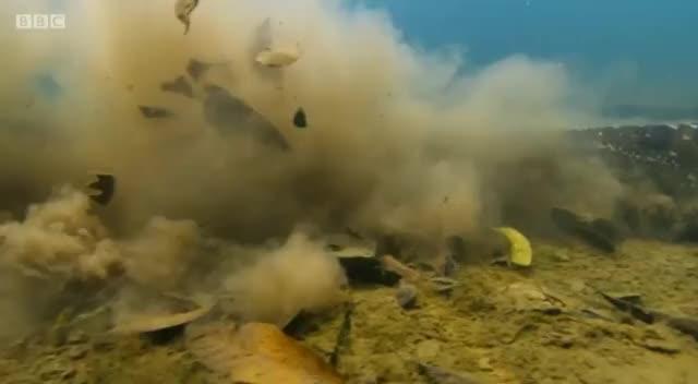 Watch and share An Anaconda Swimming Underwater GIFs by Mahmoud M. Mahdali on Gfycat