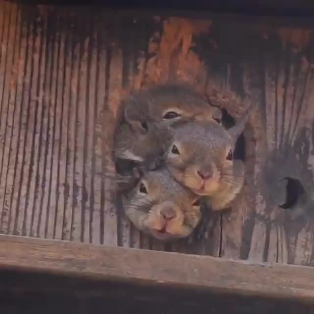 Watch and share Squirrels GIFs and Squirrel GIFs by tothetenthpower on Gfycat