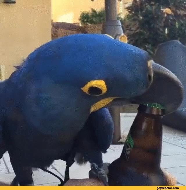 Попугаи гиф смешные, морозом