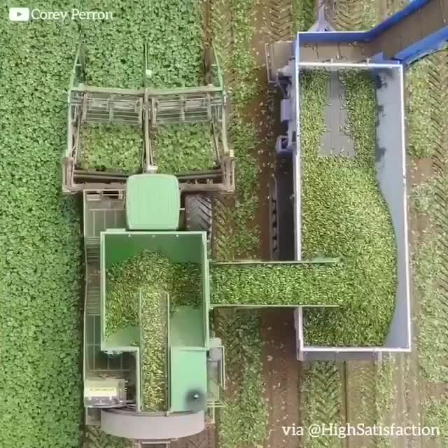 Watch Cucumber harvest GIF by JustViral.Net (@justviralnet) on Gfycat. Discover more oddly satisfying GIFs on Gfycat