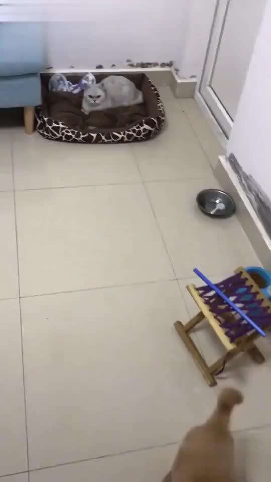 Poor puppy GIFs