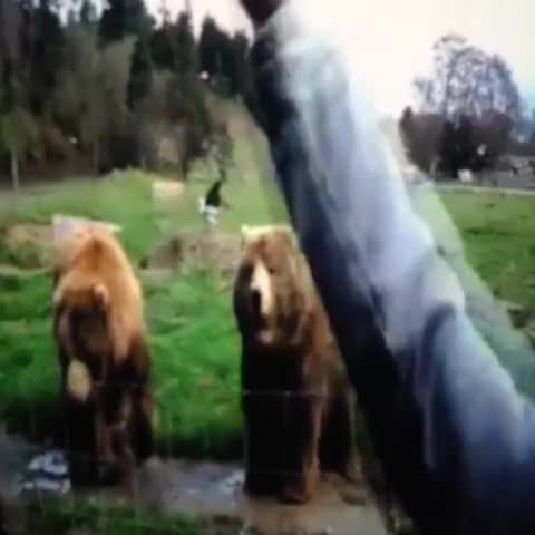 Watch and share Waving Bears😄 #cute GIFs by Comedian on Gfycat