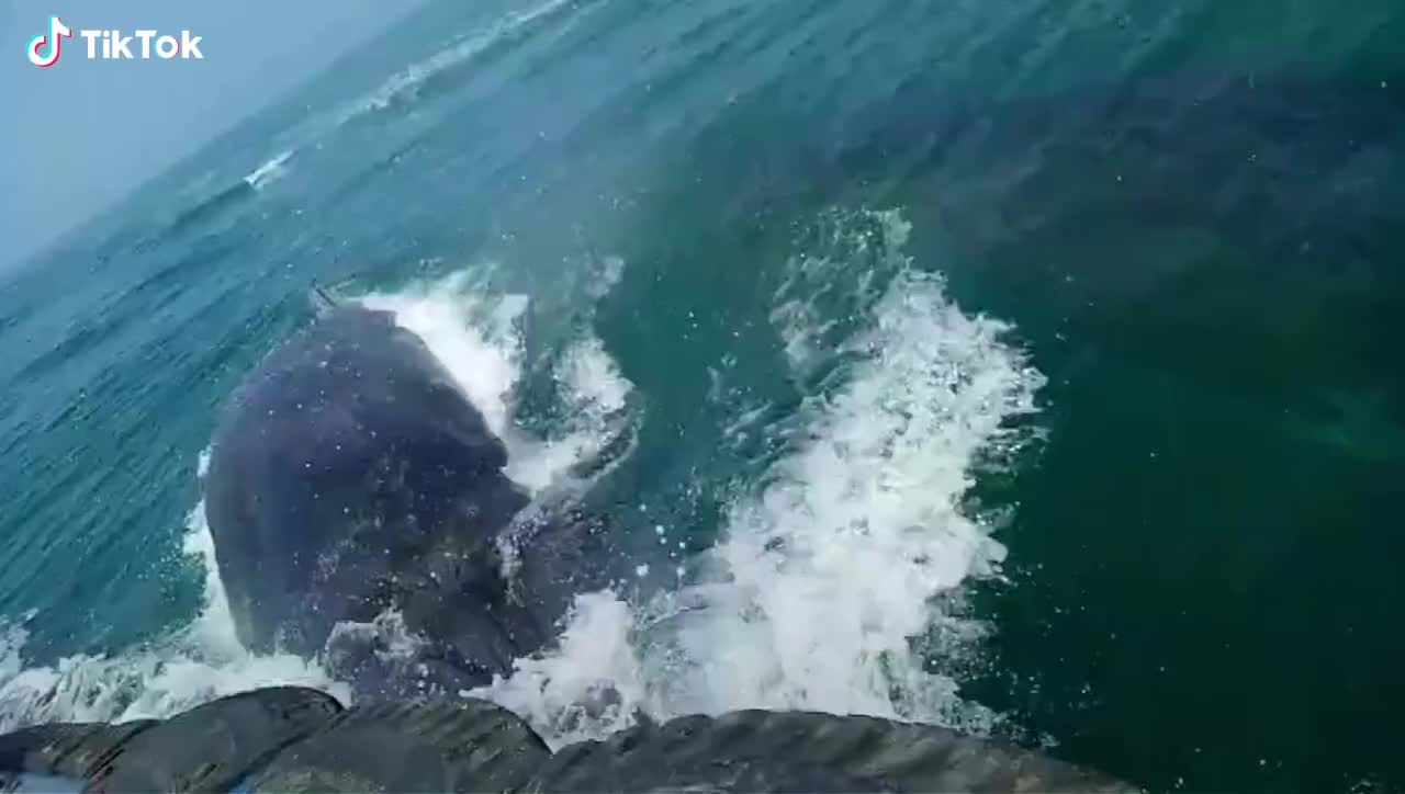 nature, 🔥 A big sperm whales GIFs