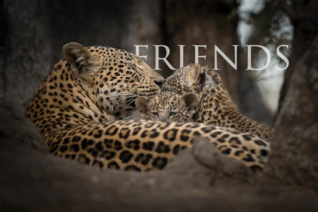 Watch and share Words GIFs by Londolozi Game Reserve on Gfycat