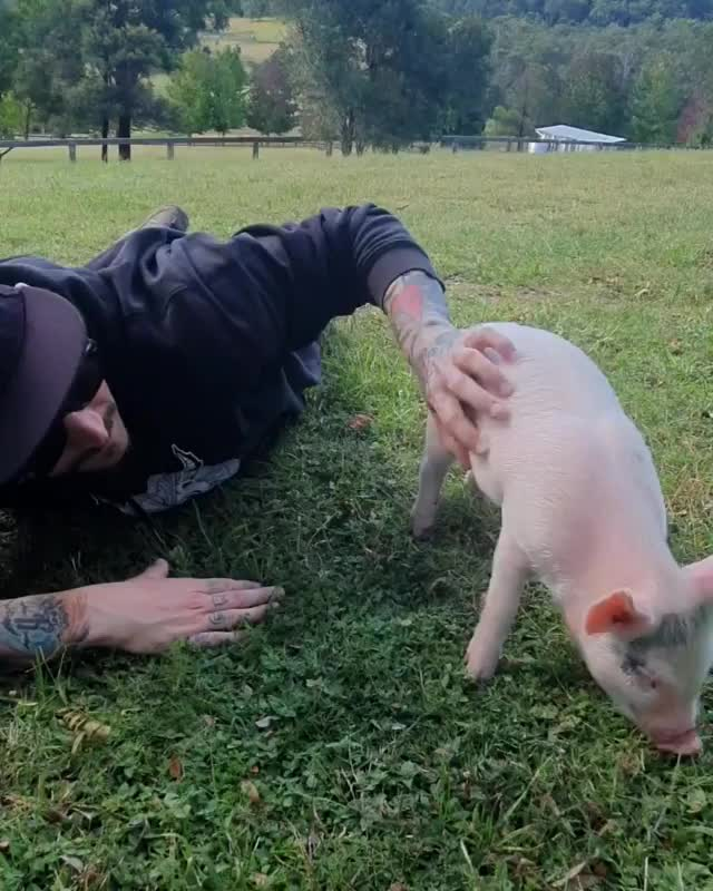 Watch and share Where Pigs Fly Farm Sanctuary GIFs by b12ftw on Gfycat