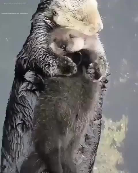 Watch and share Funny GIFs and Otter GIFs on Gfycat