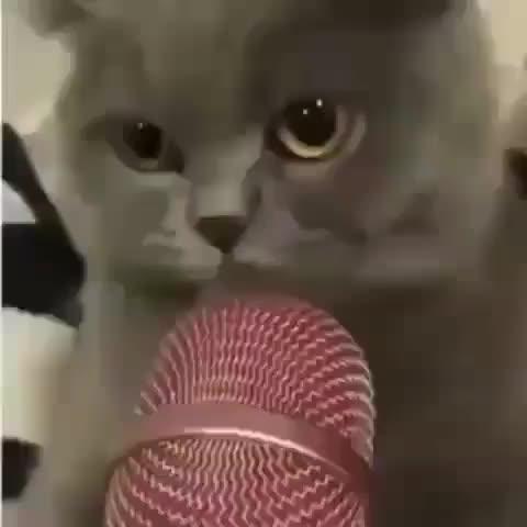 Meow GIFs