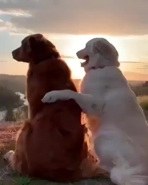 Good bois for life GIFs