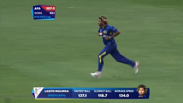 Watch and share Cricket GIFs and Funny GIFs by poochi on Gfycat