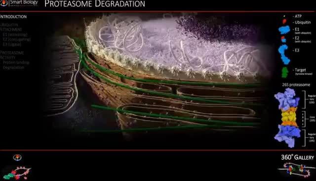Watch Proteasome Animation 3D Molecular Biology GIF on Gfycat. Discover more related GIFs on Gfycat