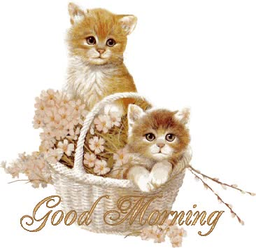 Watch and share Cute Good Morning | Good Morning Cute Cats Wish Graphic GIFs on Gfycat