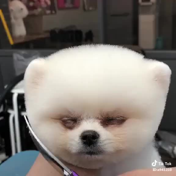 Watch and share Cutting Hair GIFs on Gfycat