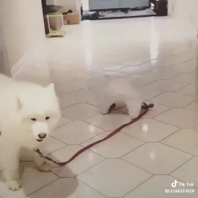 Watch and share Love GIFs by awwintiktok on Gfycat