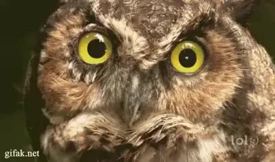 Watch and share Owl GIFs by rahsoul on Gfycat