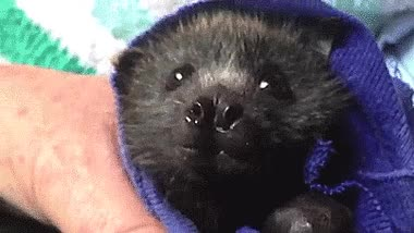 Watch and share Bat GIFs on Gfycat