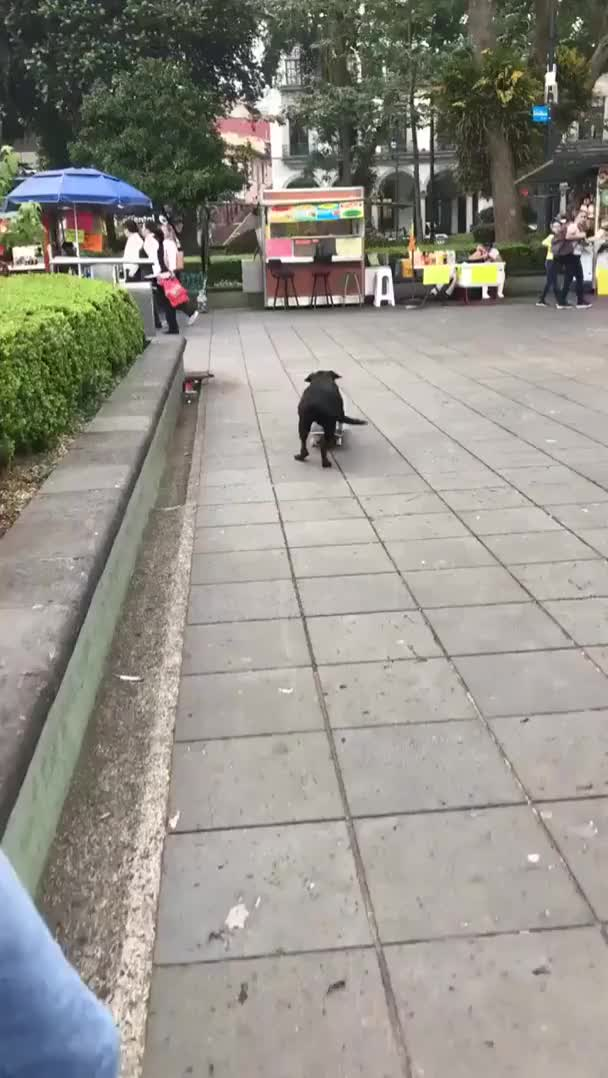 Watch and share Skateboard GIFs and Dog GIFs on Gfycat