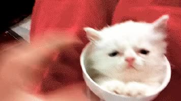 Watch 😁 grinning face with smiling eyes  😸 grinning cat face with smiling eyes  😼 cat face with wry smile GIF on Gfycat. Discover more related GIFs on Gfycat